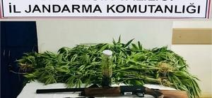 Jandarmadan uyuşturucu operasyonu Operasyonlarda 4 kişi yakalandı