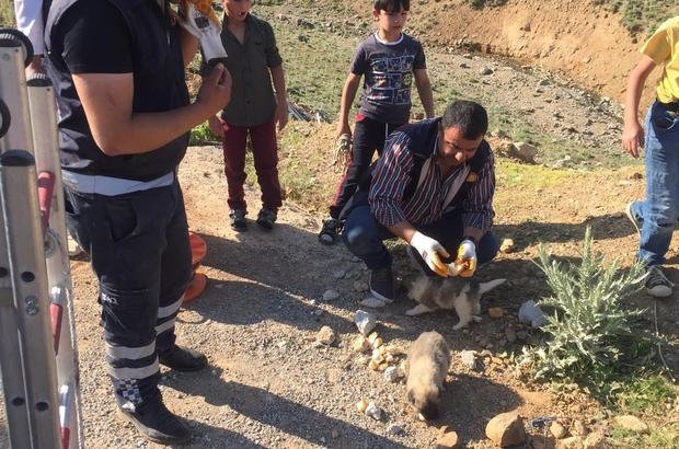 Van'da köpek kurtarma operasyonu İki gün boyunca kuyuyda mahsur kalan yavru köpekler, itfaiye ekipleri tarafından kurtarıldı