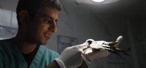 Mersin'de 'ebabil' operasyonu Mersin'de 4 katlı bir binanın son katında yuvasının girişinde asılı kalan ebabil kuşunu, itfaiye ekipleri kurtardı Uçamayan ve yaralı olan ebabil kuşunu koruma altına alan ekipler, tedavi için Veteriner Hizmetleri Daire Başkanlığına teslim etti