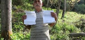 (Özel) Tapulu arazisine 40 yıl önce diktiği kavak ağaçlarına, orman arazisi diye el konuldu