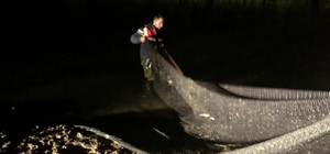 Jandarmanın balık nöbeti devam ediyor 10 ton inci kefali tekrar suya bırakıldı