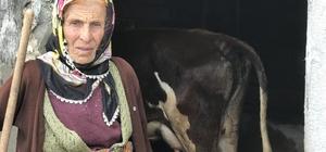 Honefter Yaylası'ndaki inek ölümleri yayla sakinlerini korkutuyor Bir haftada henüz bilinmeyen bir nedenle 3 ineğin ölmesi yayla halkının tedirgin ediyor Gıda ve Tarım İl Müdürlüğü yetkilileri Yanıkara Hastalığı'ndan şüpheleniyor