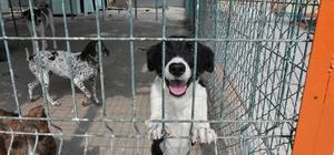 Tarsus'taki köpek bakım ve ıslah evinde tadilat yapıldı
