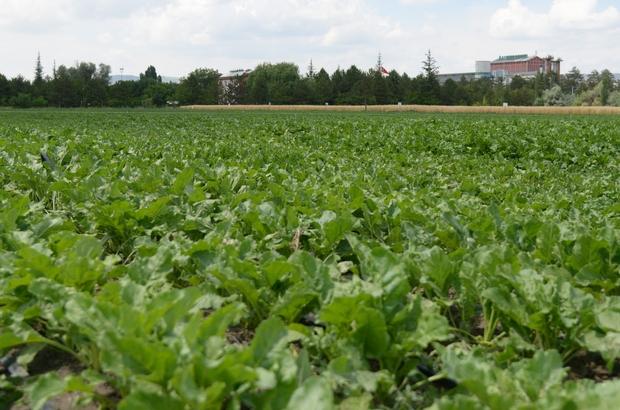 Kayseri Şeker'den, 15 Firma İle Sürdürülebilir Tarım Çalışması
