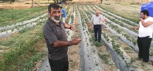 Armutlu'da organik çiftlik sezonu başladı