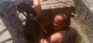 Kanalizasyona düşen yavru köpeği itfaiye kurtardı