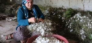 (Özel) Kümeslerinin yetersizliği nedeniyle tavukçuluk yapamayan köylüler çareyi ipekböceğinde buldu İpekböceği yetiştiren 50 haneli köy yılda 5 tonluk üretim yapıyor