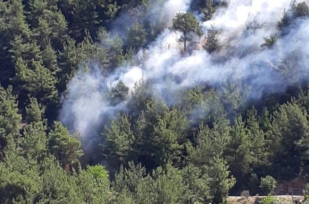 Kozan'da orman yangını - Adana Haberleri