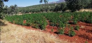 Diyarbakır'da terörün finans kaynağına büyük darbe Lice kırsalında 5 milyon 430 bin 704 kök kenevir bitkisi ele geçirildi