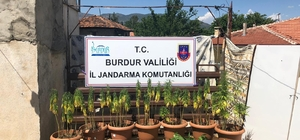 Burdur'da yasak kenevir ekimi yapan 2 kişi suçüstü yakalandı