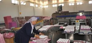 Yumurta üreticileri sıkıntıda Başmakçı'da 35 kuruşa mal edilen yumurta 20 kuruşa satılıyor Kapanan Irak ihracat kapısının açılması için devletten yardım bekliyorlar