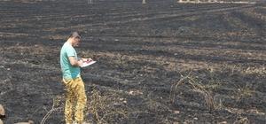 """Anız yangınları toprağın dokusunu bozuyor DÜ Ziraat Fakültesi Tarım Makinaları ve Teknoloji Mühendisleri Bölümü Öğretim Üyesi Dr. Murat Turgut: """"Anız yangınları, toprağı toprak vasfından çıkarıyor"""""""