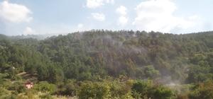 Yangın söndürme ekiplerini arı soktu Afyonkarahisar'daki yangın sonrası soğutma çalışmaları sürüyor