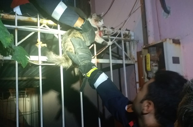 Korkuluklara saplanan kediyi itfaiye kurtardı