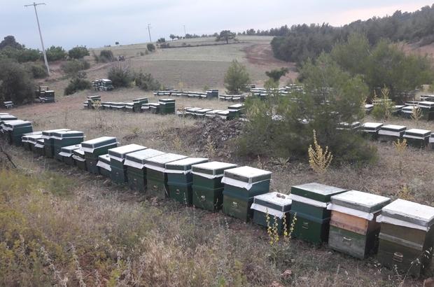 Kovan hırsızlarını jandarma 'arı' gibi çalışarak buldu Çaldıkları 300 arı kovanı ile 250 bin TL'lik vurgun yaptılar Kovan hırsızları jandarma tarafından suçüstü yakalandı