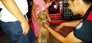 Yavru köpeğin imdadına itfaiye yetişti Muğla'da başını demir kapının korkuluklarına sıkıştıran yavru köpeği itfaiye ekipleri uzun bir uğraş sonucu kurtardı.