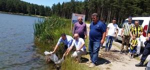 Düzce'de göl ve göletlere 50 bin yavru balık bırakıldı