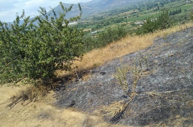 """""""Elektrik hattı koptu, mera yandı"""" iddiası Halkın ve Orman İşletme ekiplerinin çabasıyla zeytin ağaçlarına sıçramadan durduruldu"""