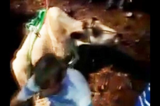 Bursa'da film gibi inek kurtarma operasyonu