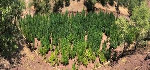 Diyarbakır'da 723 bin 860 kök kenevir bitkisi ele geçirildi Uyuşturucu tacirleri, kenevir bitkileri için araziye boru hattı ve su motoru döşemiş