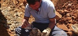 Yangından yaralı kurtulan kartal tedavi altına alındı Orman ekipleri ormanlık alanda soğutma çalışmaları sırasında yaralı buldukları Kartal'ı kurtardı.