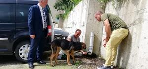 Köpeği dereye atan işçiye 'Hayvanlara Bakma' görevi Kalkandere ilçesinde bir ay önce yavru köpeği dereye atan Sefer Kayacı'ya anlamlı görev