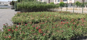 Bağlar Belediyesi'nden organik tarım hamlesi