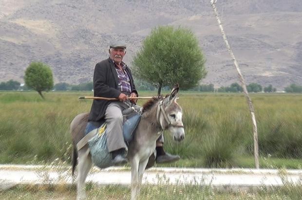 Sultan Sazlığı bölgesinde 78 yaşında olmasına rağmen çobanlık yapıyor