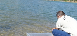 Balıkesir'de 95 bin yavru sazan suya bırakıldı