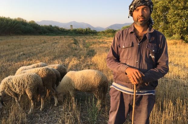 """(Özel) Siyaseti bırakıp çobanlık yapıyor Eski DSP Kemalpaşa Belediye Başkan adayı Savaş Memiş: """"Hizmet benim içimde var. Halka hizmetimi çobanlıkla devam ettireceğim"""" """"Şehir hayatından uzaklaştım, şu anda çadırda yaşıyorum"""" """"Bütün siyasetçiler kırlara çıksın, kuşların sesini dinlesinler"""""""