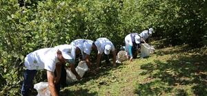 """Sigortalı fındık işçileri bahçede Ordu Büyükşehir Belediye Başkan Dr. Mehmet Hilmi Güler: """"Projemiz milletimize hayırlı olsun"""""""