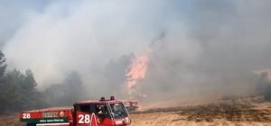 Balıkesir'de çıkan orman yangını söndürüldü