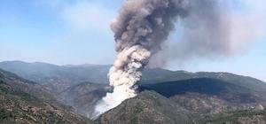İzmir'de orman yangını Zeytinlikte başlayan yangın ormana sıçradı