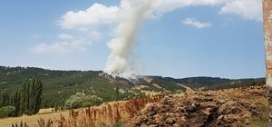 Yozgat'ta 3 hektarlık alan kül oldu
