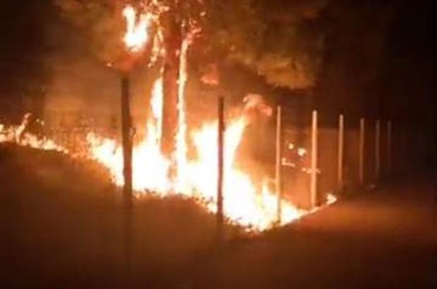 Çocukların torpille oyunu yangına neden oldu Çocukların attığı torpil bir sitenin bahçesindeki otları ve ağacı tutuşturdu Mahallenin muhtarı, sosyal medyadan canlı yayınla duruma tepki gösterdi