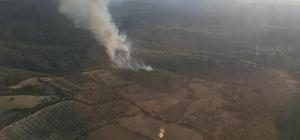Bergama'daki orman yangını söndürüldü