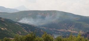 Bingöl'de orman yangını, ekipler söndürdü