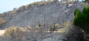 """""""Ormanİzmir"""" buluşması için hazırlıklar tamam İzmirliler büyük yangının yaralarını sarmak için bir araya geliyor"""