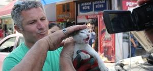 Girdiği otomobilin motorunda 40 kilometre yolculuk etti Otomobil motoruna giren kedi 2 saatlik uğraşın ardından kurtarıldı