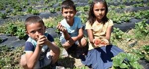 """Adana'da tarımı güçlendirme projeleri Büyükşehir Belediye Başkanı Zeydan Karalar: """"Feke'de, Saimbeyli'de, Karaisalı'da, Pozantı'da lavanta ekimini başlatacağız"""" """"Tufanbeyli'nin nohutu ve fasulyesi için paketleme tesisi kuracağız"""""""
