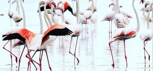 Yumurtalık Lagünleri Milli Park statüsüne geçti Yumurtalık Lagünleri yüzlerce bitki ve kuş türüne ev sahipliği yapıyor