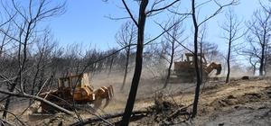 İzmir'de yanan 500 hektarlık alanı yeşillendirmek için hazırlıklar başladı
