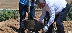 Yeşil Bünyan için ağaçlandırma çalışmaları devam ediyor