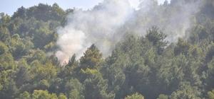 Sinop'ta şüpheli orman yangını