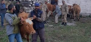 Kars'ta çalınan hayvanlar Ardahan'da bulundu