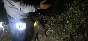 Bahçe teline takılan yavru ayı boğularak telef oldu