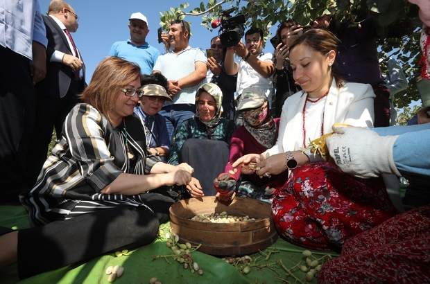 Başkan Fatma Şahin, gurme ve gastronomi yazarları ile birlikte fıstık topladı Başkan Şahin, paramotora bindi Gastroantep Festivali renkli görüntülere sahne oluyor