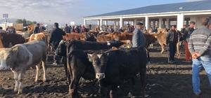 Kars'ta saman fiyatları hayvan pazarını olumsuz etkiliyor Hayvan Pazarı'ndaki yoğunluk satışlara yansımıyor