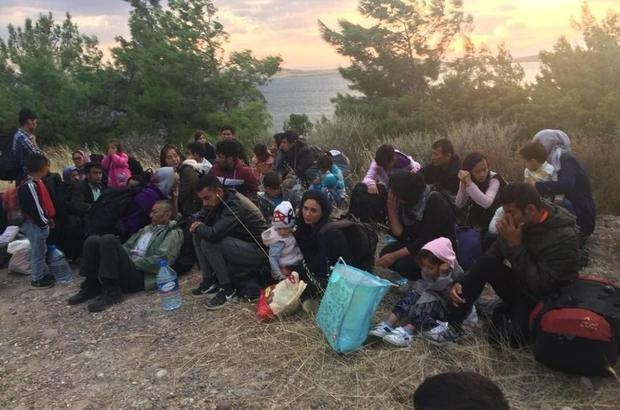 Ayvalık'ta 48 göçmen 3 organizatör yakalandı Ormanlık alanda saklanırken bulundular