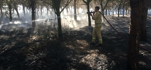 Çorlu'da 15 Temmuz Şehitler ve Demokrasi Ormanı'nda yangın Ağaçlık alanda çıkan yangın uzun uğraşlar sonucu söndürüldü